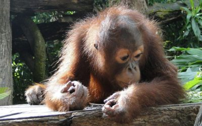 Palm Oil: What's The Big Problem?